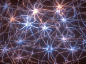 Neurones miroirs