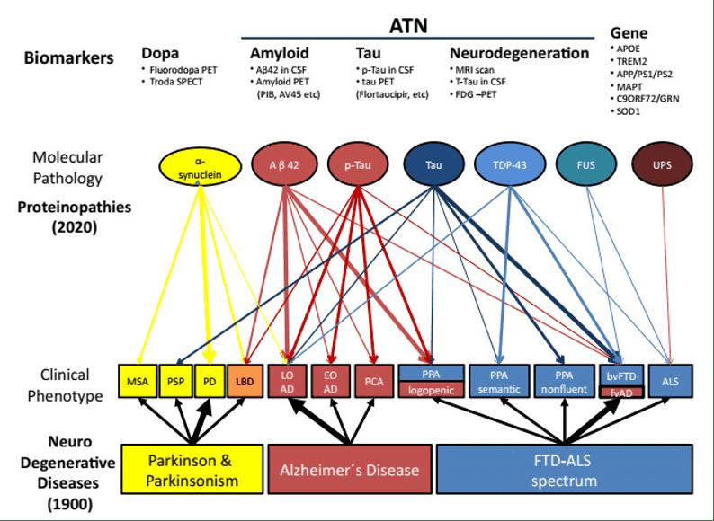 Figure 1. Protéinopathies dans les démences neurodégénératives (Allegri, 2020). Corps de Lewy